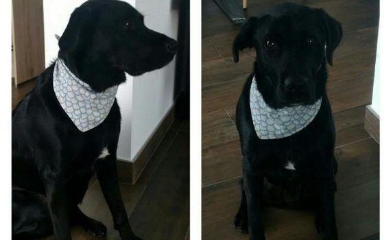 Bandanas-telas-patchwork-para-nuestras-mascotas